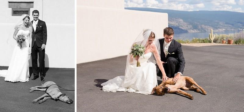 Kelowna Wedding with dog